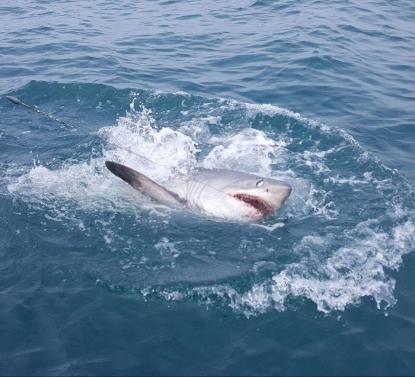 12 Hour Shark Fishing