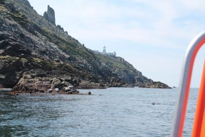 2 Hour Seals & Lighthouse Safari