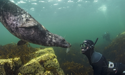 Swim with the Seals at Lundy Island